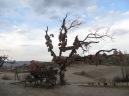 El árbol de los deseos cappadocios