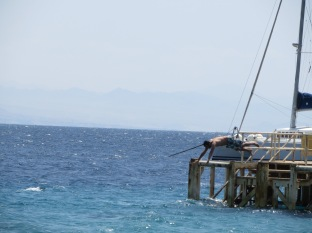 Al aguaaaaa... a ver los peces tropicales!!!