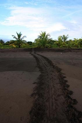 Foto nacho.tv. Éste es el rastro que deja la tortuga en la arena y lo que buscábamos aquella noche!