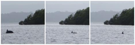 Y voilá! Qué alegría tan indescriptible cuando vimos asomar el lomo de este precioso delfín! Por fin! Gracias por dejaros ver :D