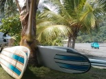 Palmeras y surf