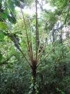 Helechos al estilo el Bosque Encantado