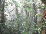 Bosque nuboso, de miedo!