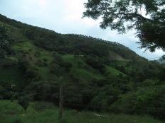 Preciosos prados a las faldas de la montaña