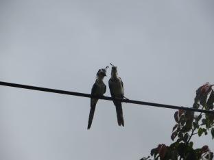 Una pareja de quetzales nos dieron la bienvenida al parque natural El Arenal