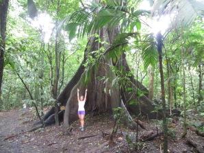 Espectacular árbol de más de 40 metros de altura y de unos 400 años de edad!