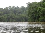 Más de una hora de recorrido entre esos canales llenos de caimanes y cocodrilos...uuuuuuhhhhh!