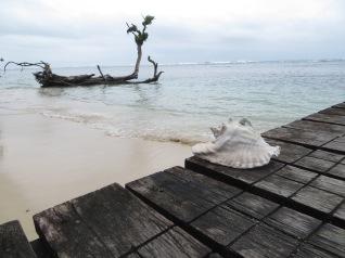 Una zona de la playa se conoce como el cementerio de las conchas de mar, y aunque muchas de ellas están rotas es impresionante el tamaño que tienen!