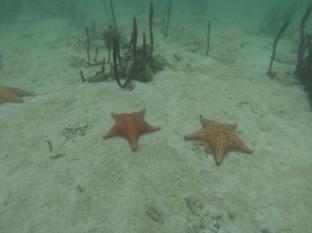 Así es el fondo marino en Punta Manglar