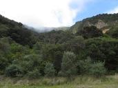 Entre montañas y vegetación, mucha vegetación!