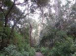 En medio de un bosque de cuento!