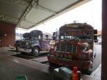 Los buses tan molones que se gastan allí