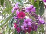 Hermosas flores en el Parque Arví