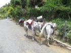 Tres opciones para subir: tuk-tuk, en burro o a pie... nos decidimos por la más económica... pero la del burro era un puntazo!