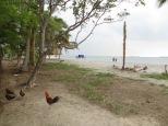 Las gallinas también tenían acceso directo al hostel y al mar!