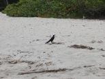 Esta no es la única ave que vimos. Palomino está lleno de especies tanto endémicas como migratorias.