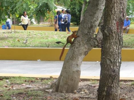 Pillamos a una ardillita en el parque :)