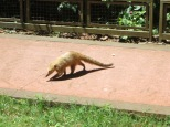 Por allí se paseaban algunos descarados coitíes, lo que en Costa Rica llamaban pisotes.