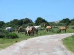 Momentos previos a cruzarnos con el torito... que conste que yo no estoy acostumbrada a pasearme entre vacas!