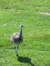 Una avestruz!