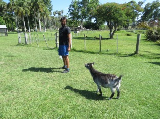 Esta cabra nos persegía!