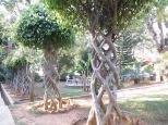 Alucinados nos dejaron los troncos de estos árboles!
