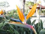 Nos encanta esta flor! Depende como la mires parece un pequeño colibri :)