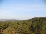 Bosques repletos de árboles