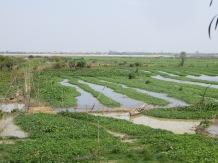Al otro lado de la valla, campos de arroz. Nadie imaginaba lo que estaba pasando en este pequeño recinto
