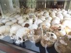 Cada cráneo lleva una pequeña pegatina identificando el tipo de ejecución que sufrió