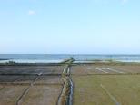 Sorprende lo cerca del mar que se puede cultivar el arroz... recuerdando a la terreta y nuestra albufera :)