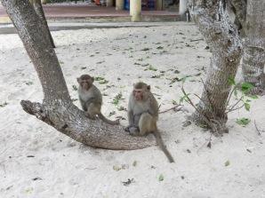 Después de una mini siesta tocaba ir a Monkey Island