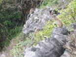 Los monos se apoderan de toda la isla