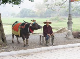 "Vaca disfrazada esperando a ""ser montada"" por algún turista O_o"