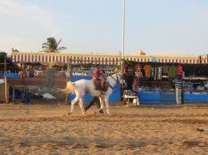Además de la principal atracción (que claramente éramos nosotros), había un muy pequeño espacio con un caballo para ser cabalgado, siempre acompañado por su cuidador.