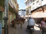 Se permite la entrada a motos y a vacas / búfalos, (no sé como llamar a esta pacífica bestia :p )