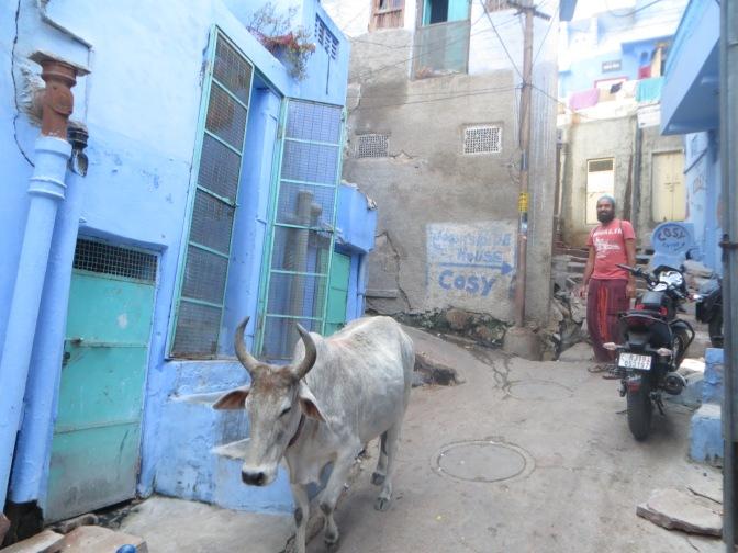 [India] Jodhpur, la ciudad azul del Rajastán