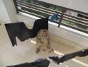 Os presento a este mono, que entró a nuestra habitación por la puerta del pasillo, cogió dos plátanos que teníamos escondidos y salió a la terraza a darse el homenaje. Mientras tanto, a mi (que estaba sola en la habitación) me dio un ataque de histeria y de risa a partes iguales y cuando me tranquilicé pude captar el momento en el que devoraba el segundo plátano