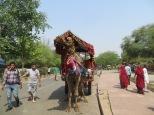Camellos a la salida del complejo para llevarte al Fuerte Rojo